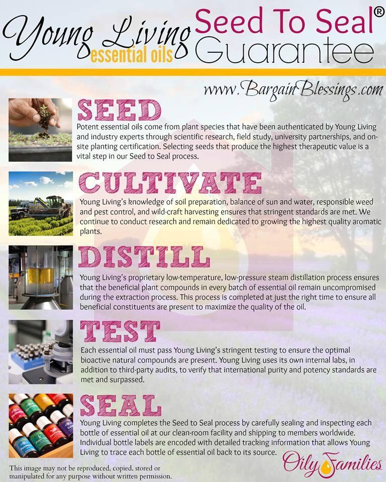 seed-process