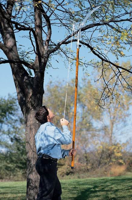 tree-pruner